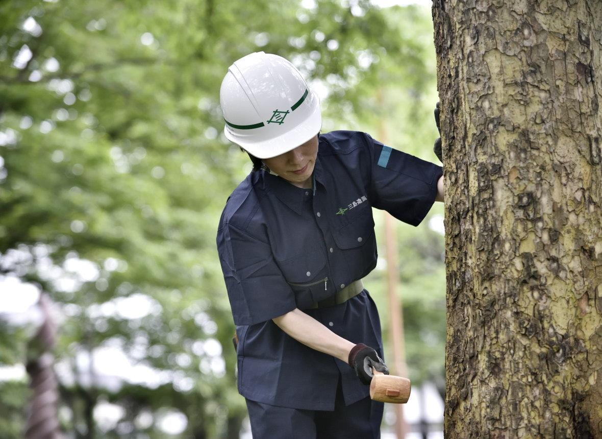 樹木診断サービス