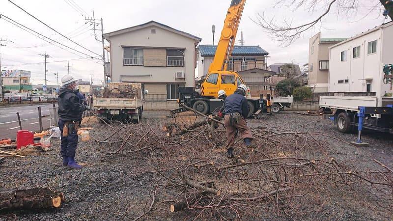 桜を剪定で切った枝を集める