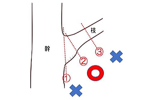 適切な剪定位置