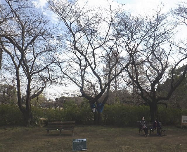 水城公園内 作業前