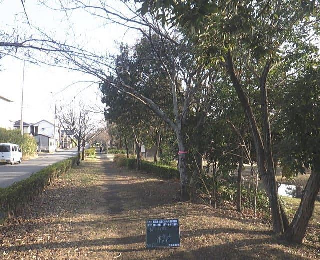 見沼元圦公園内 作業前