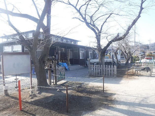 寄居町k保育園サクラ樹勢回復措置作業アフター