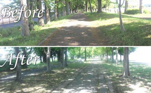 さきたま緑道・花の里緑道様 枯損木の伐採、側溝清掃、芝・草刈作業