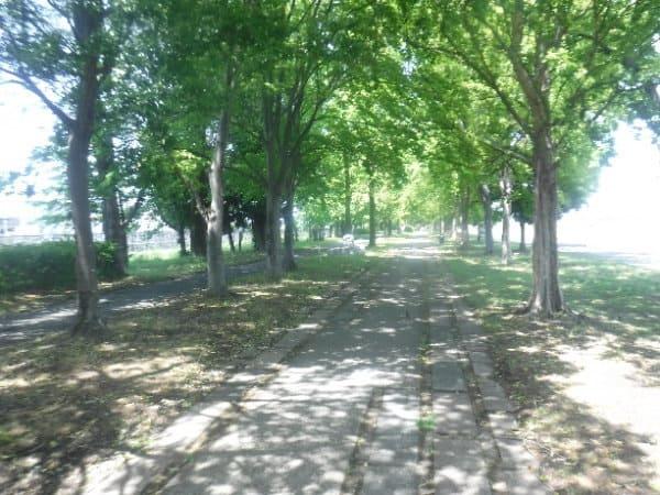新緑の緑道