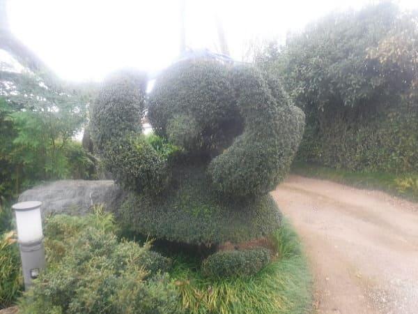 埼玉県のマスコットコバトンの植木